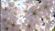 Нежният Аромат на Пролетта