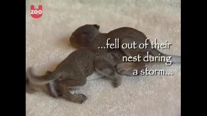 Котка,която осиновява катерици