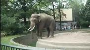 Лош слон