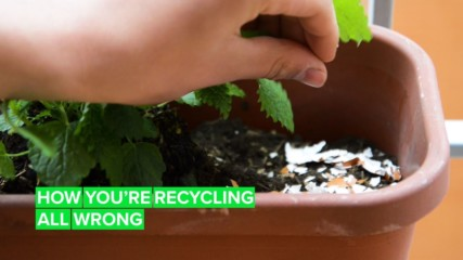 Here's how you SHOULD be recycling toilet paper rolls