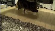 Котето Мару се рови из торбички