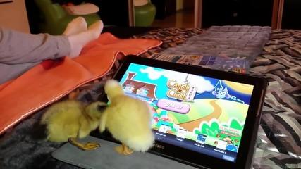 Две малки смешни Патици как си играят на таблет