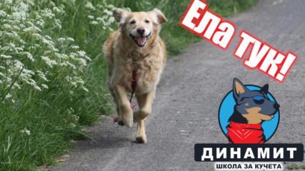 Куче, команда