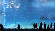Красотите на водния свят