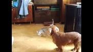 Куче И Коте - Сара И Уини