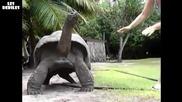 Незадоволена жена си играе с костенурка :д