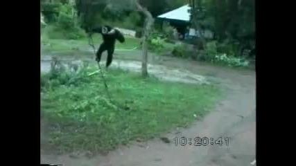 Маймуна се гаври с куче