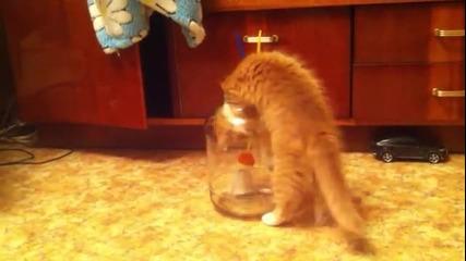 Коте влиза в буркан