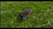 Пътешествието на птицечовката