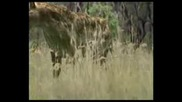 Walking with Beasts - Ep 5 - Sabre Tooth - Part 2 of 3