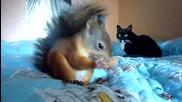 Катеричката Ноби хрупа орехчета на кревата.