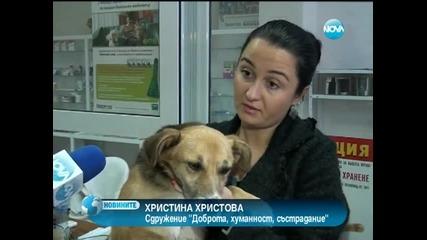 България - Инциденти - Куче с отрязани лапи оцеля по чудо във Видинско