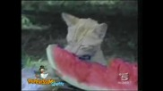 Crazy Cat.flv