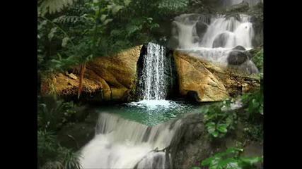 Красота и звуци от природата