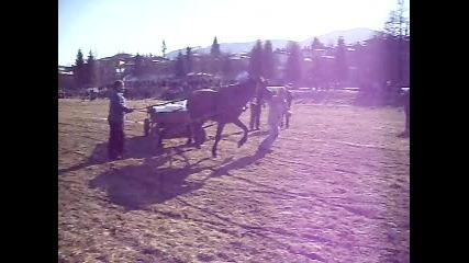 kobila preslava