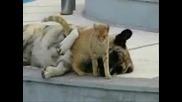Куче и котка най добри приятели