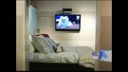 Петзвезден хотел за кучета отвори врати в Ню Йорк