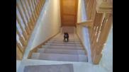 Смях !!! Най - Бързото Слизане На Куче По Стълби