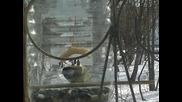 Помощ за Птичките през Зимата ...