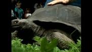 Колко тежи вашата костенурка?