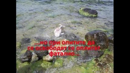 Мъртви Делфини По Черноморието