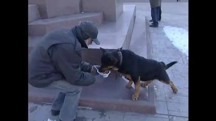Бездомник предпочита да нахрани кучето си,вместо себе си