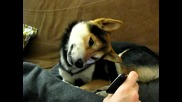 Куче гледа друго куче на телефон