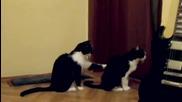 Котка моли за прошка - Смях