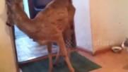 Елен се промъква в къщата за да яде котешка храна