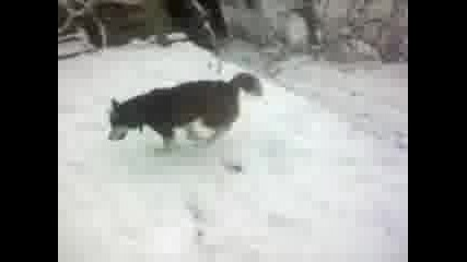 My dog :))