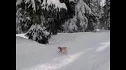 Snow Buddies - Lean On Me