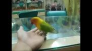 Папагала знае много тайни!