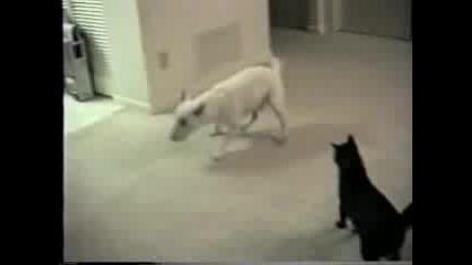 Луда котка срещу куче много смях xd