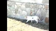 котка хванала гущер