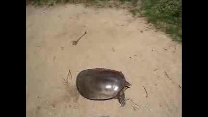 Най - бързата костенурка :p