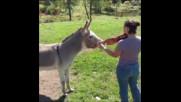 Голям дует са! Това магаре определено има вкус към музикалните инструменти