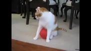 наелектрезирана котка- смях