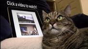Котка Расист !! (смях) + subs