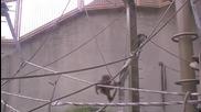 Maruyama Zoo - Orangutanq f,dkhwjdk