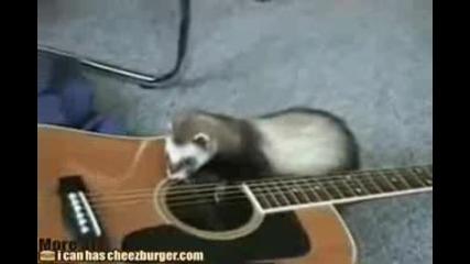 Пор срещу китара