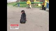 Електро Шок  каишка  за Кучета