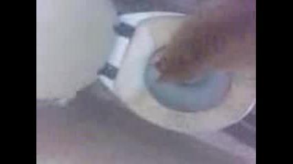 Яяя, какво има в тоалетната ?!.. - Котето Джони