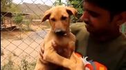 Индийци спасяват куче паднало в дълбок кладенец