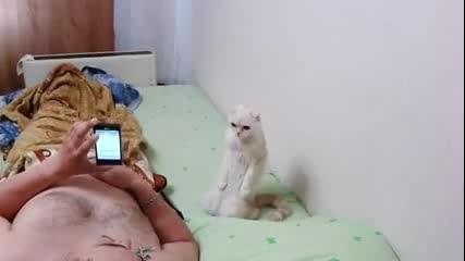 Руска патриотична котка
