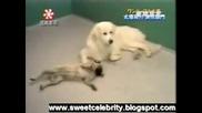 Най - Умното Куче На Земята