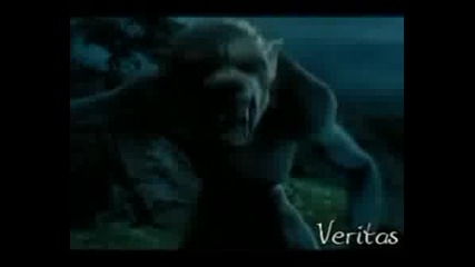 Severus Snape - Must Been Love