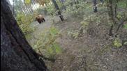 Мечка напада велосипедист в гората