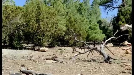 Динозаври : Когато се чифтосват