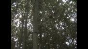 В Бамбуковата Горичка - 2