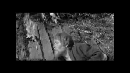 Аквариум - Волки и Вороны
